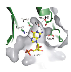 The guanosine binding pocket of BsRppH