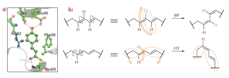 Isomerisation mechanisms and overview of PYP