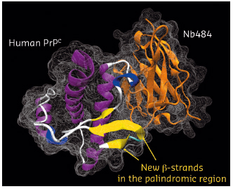 Crystal structure of the human PrPC in complex with a nanobody