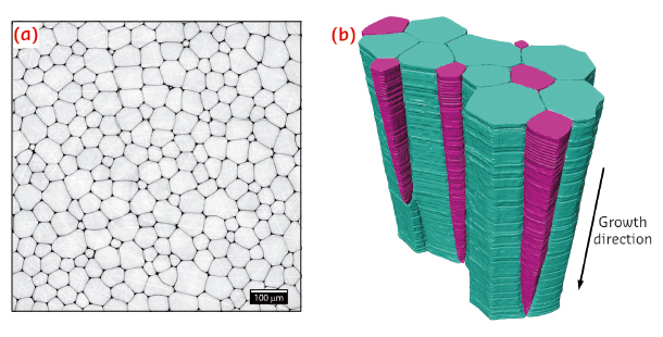 Representative 2D microtomography section obtained perpendicular to the growth direction of the prismatic layer.