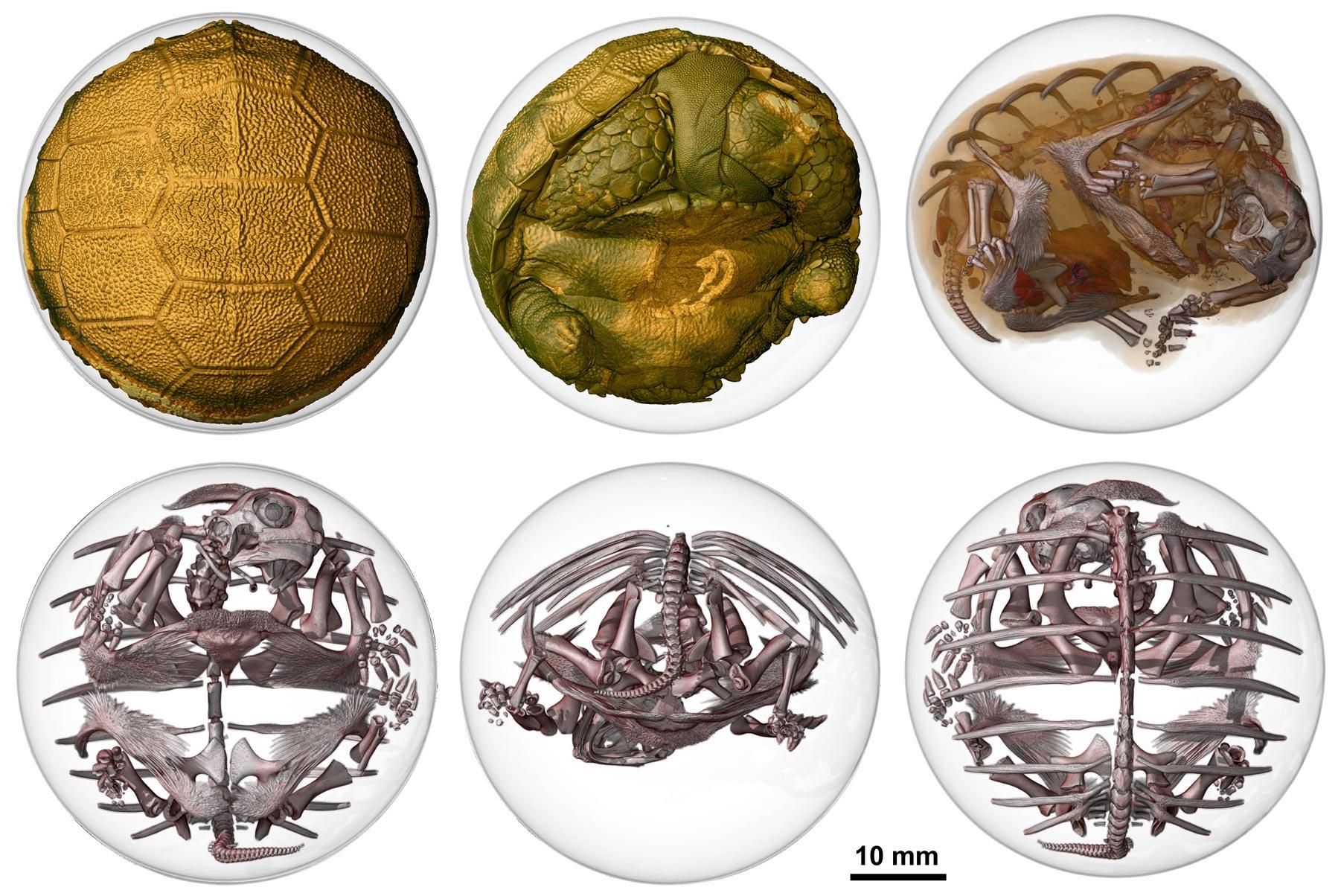 beauty of science inside a turtle egg