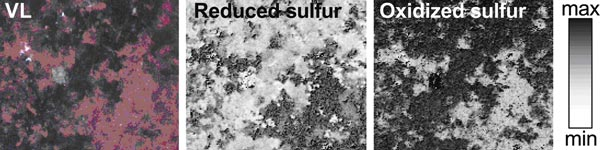 Normalized images of the distribution of the reduced (intact) and oxidized (altered) sulfurs on the most degraded sample (8x7mm2). Copyright American Chemical Society.