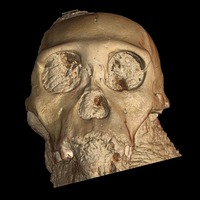 Rendering of the 3-D scan of the skull of Australopithecus sediba child. Credits: P. Tafforeau