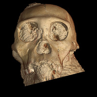 A 3-D rendering of the skull of Australopithecus sediba from an experiment at the ESRF beamline ID19. Credit ESRF/P. Tafforeau.