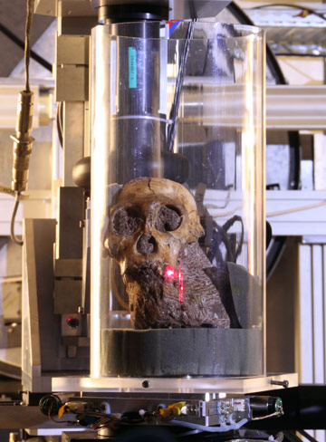 The skull of Australopithecus sediba during the experiment at the ESRF beamline ID19.