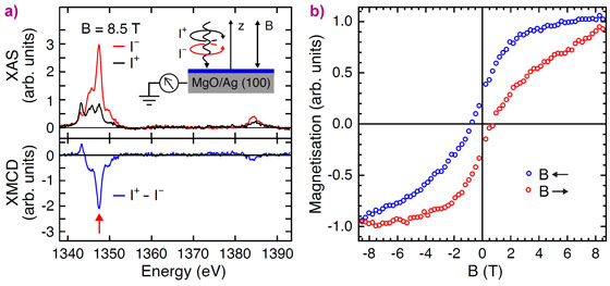 X-ray absorption spectra and circular magnetic dichroism of an ensemble of individual Ho atoms adsorbed on MgO