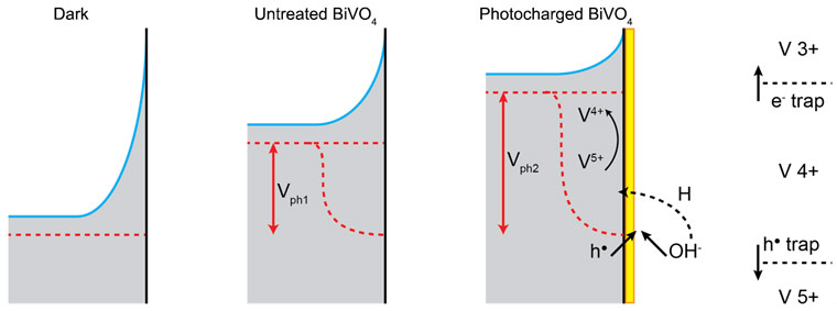 Energy band diagrams of BiVO4 in the dark and under illumination before and after the photocharging treatment