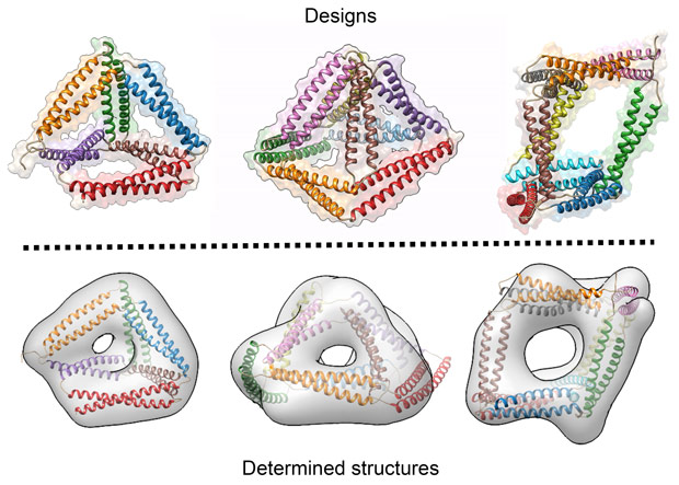 Designed and determined structures