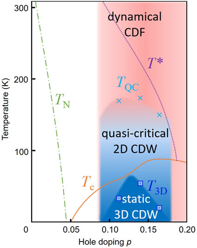 CDF dominate the phase diagram, coexisting both with the quasi-critical 2D-CDW and with superconductivity.