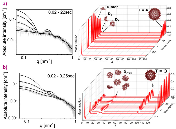 The kinetics of Cp149 dimer assembly