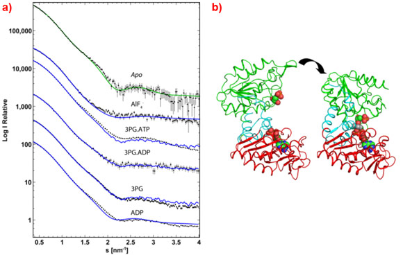 Experimental SAXS data and view of the conformational change of PGK complexes.