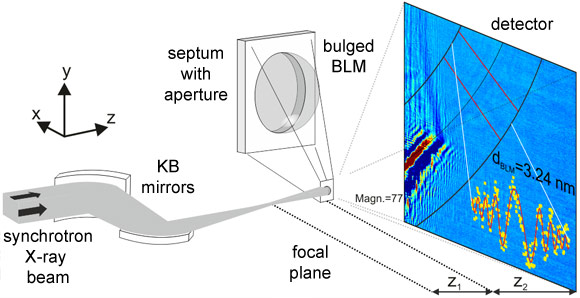 Coherent diffraction imaging of a lipid membrane