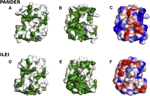 Surface properties of the structures of FAM3B PANDER and FAM3C ILE