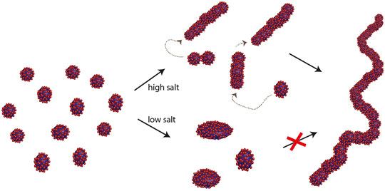Transformation of spherical/ellipsoidal micelles to worm-like micelles at higher salt concentration