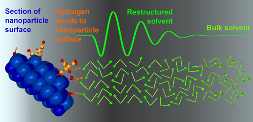 Enhanced short-range order of solvent molecules at ZnO nanoparticle surfaces.