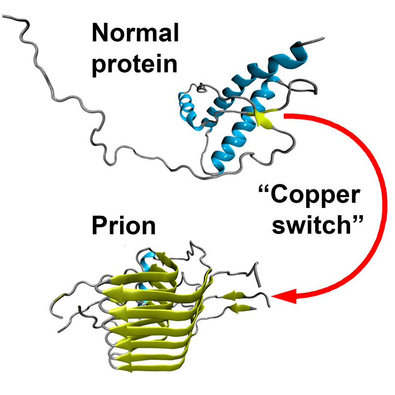 causes of prion diseases Symptoms while all of the prion diseases cause slightly different symptoms, all prions seem to have a unique fondness for the nervous system.